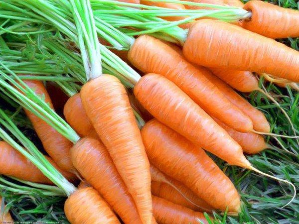 Морковь аллерген или нет