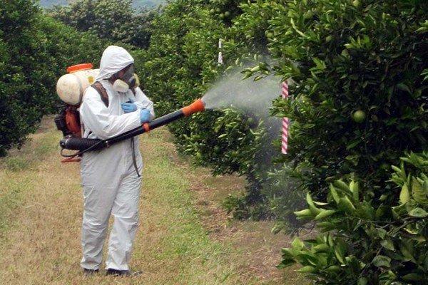 химическая обработка деревьев