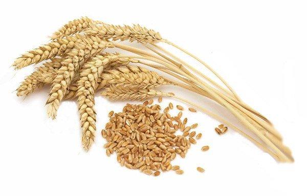 Аллергия на пшеницу у ребенка чем кормить