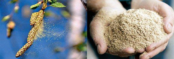 пыльца березы, древесная пыль