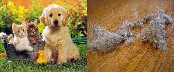 животные и домашняя пыль как причины аллергии