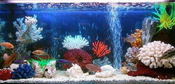 аллергия на рыбок в аквариуме