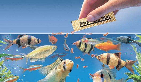 аллергия на корм для рыбок