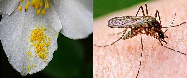внешние факторы вызывающие аллергию