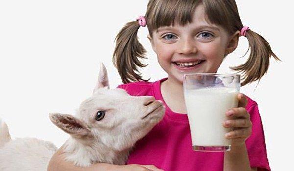 Аллергия на козье молоко у грудничка