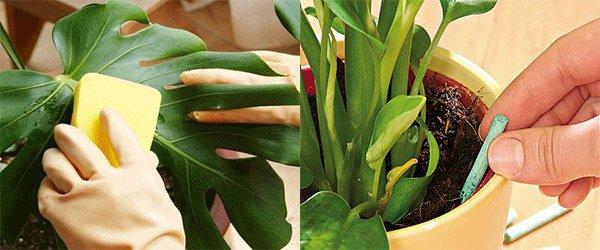 пыль на растениях, удобрения для растений