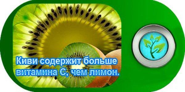 fruktkiwi