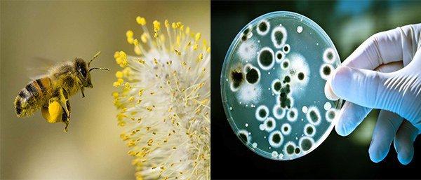 пусковые механизмы бронхиальной астмы