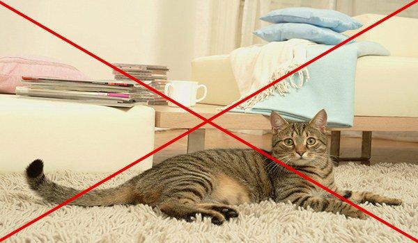 не следует держать в помещении животных