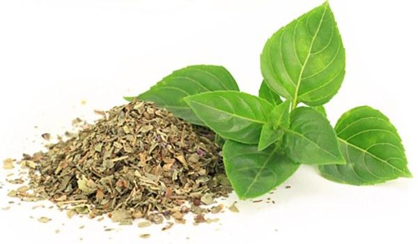листья шалфея при себорее головы