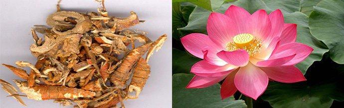 корень шелковицы, экстракт лотоса