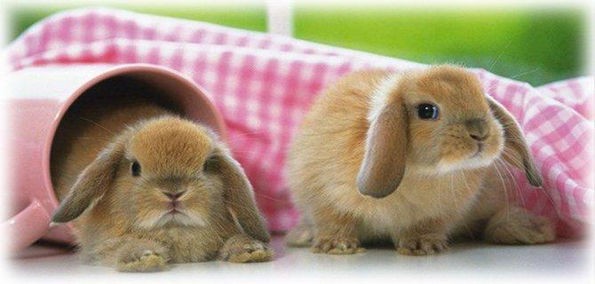Аллергия на кролика симптомы