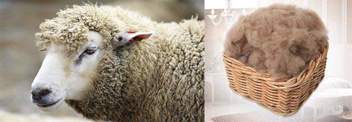 аллергия на овечью шерсть