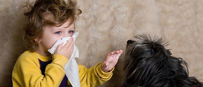 аллергия на собачью шерсть