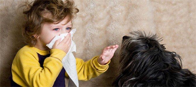 Аллергия на собаку как проявляется