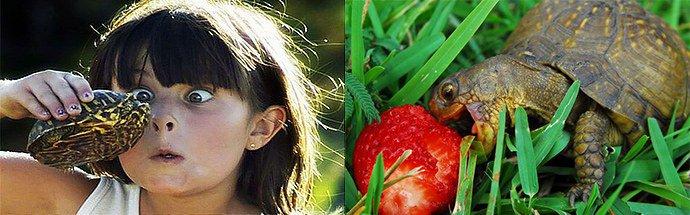 аллергия на черепах у детей