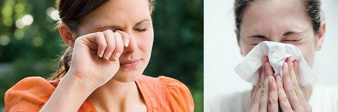 Аллергия на хомяков симптомы