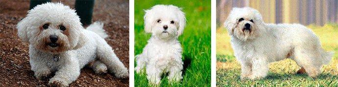 собаки без подшерстка
