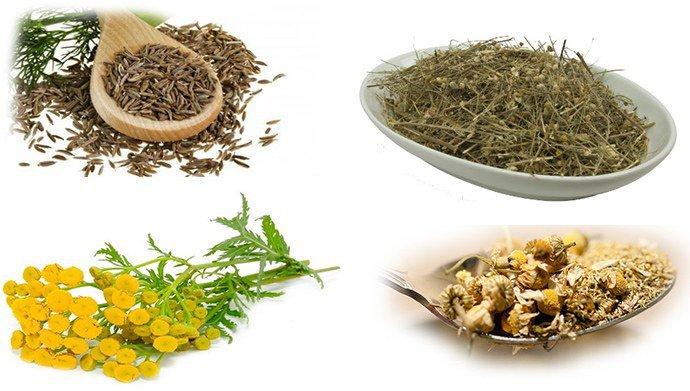 семя укропа, полынь, пижма и ромашка