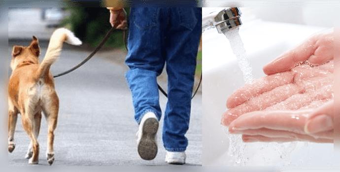 мытье рук после выгула домашних животных