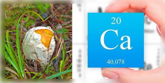 Кальций и земляной гриб