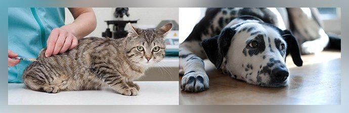Пиперазин для животных