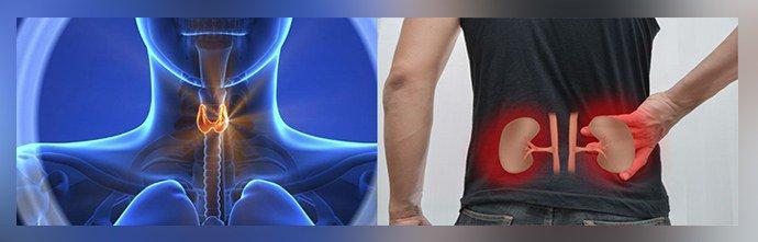 болезни щитовидки и почек