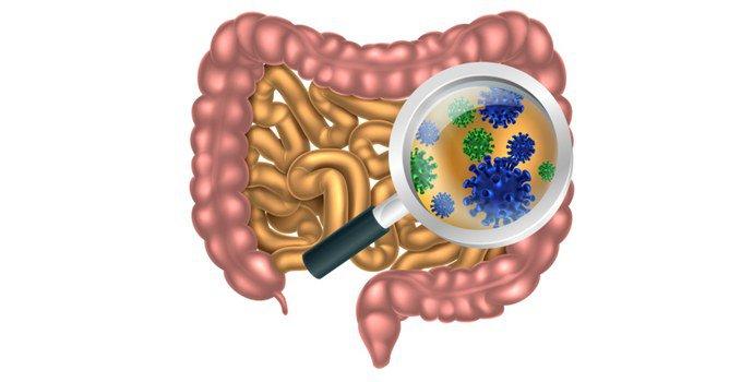 Расщепление в кишечнике