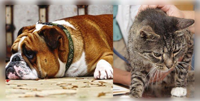 Эхинококкоз у собак и кошек