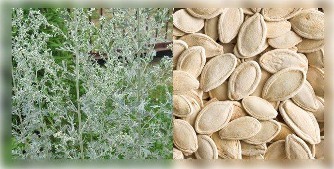 Полынь и семена тыквы