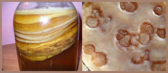 Кашица из чайного гриба