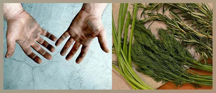 Грязные руки и плохо вымытая зелень