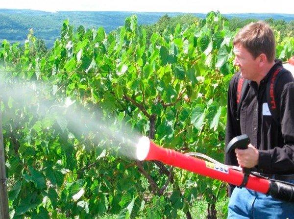 обработка винограда химикатами