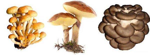 самые безопасные грибы в плане развития аллергии