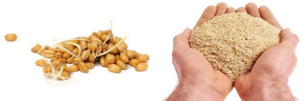 продукты содержащие пшеничный белок