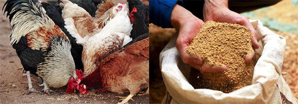 особенности кормления птиц