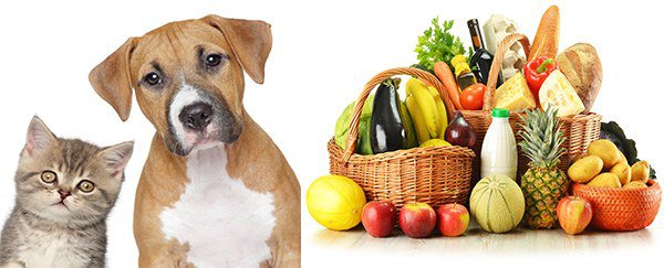 животные и продукты как причины аллергии на языке