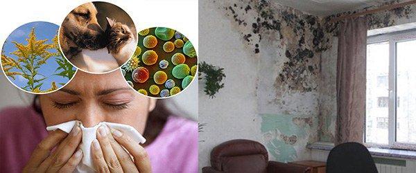 бытовые аллергены частая причина развития астмы