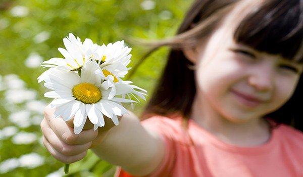 аллергия на ромашку у детей