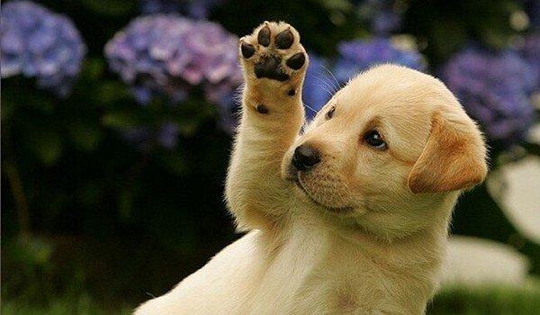 атопический дерматит у собак