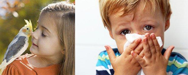 аллергия на попугаев у детей