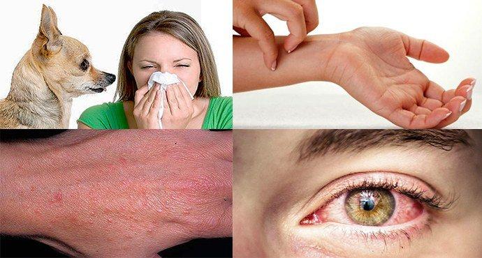 проявление аллергии на собак