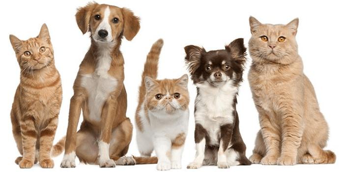 Заражение от домашних животных