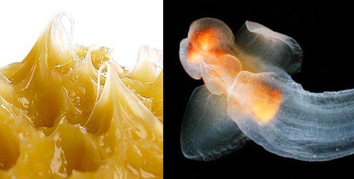 Солидол и экстракт моллюсков