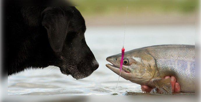 Заражение через животных