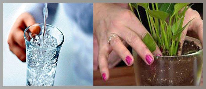Потребление воды, контакт кожи с почвогрунтом