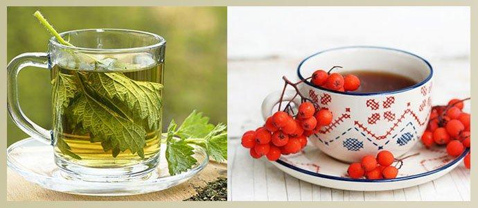 Чай из крапивы, отвар рябины