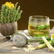 Фитотерапия в лечении аллергических проявлений